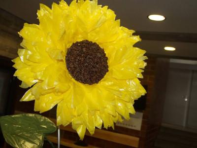 Sonnenblume ca. 2 m groß